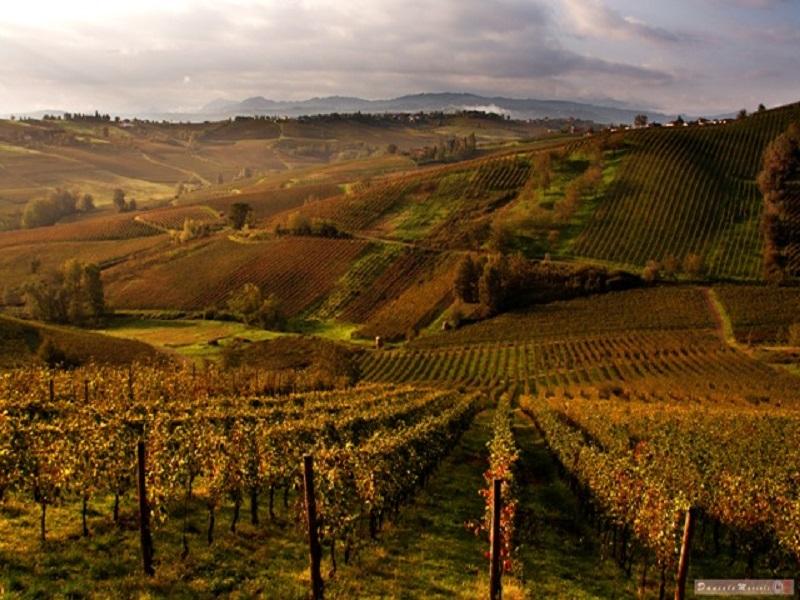 Colli-Piacentini autunno rid